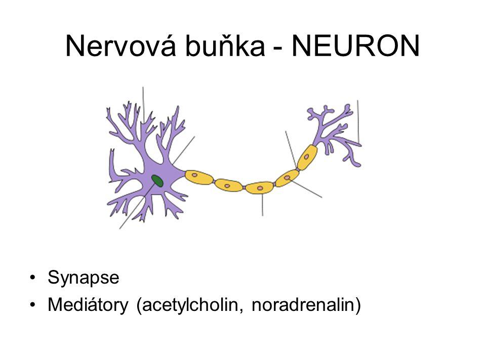 Nervová buňka - NEURON Synapse Mediátory (acetylcholin, noradrenalin)
