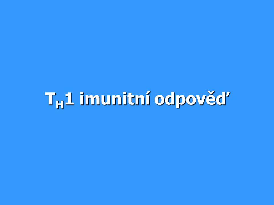 TH1 imunitní odpověď