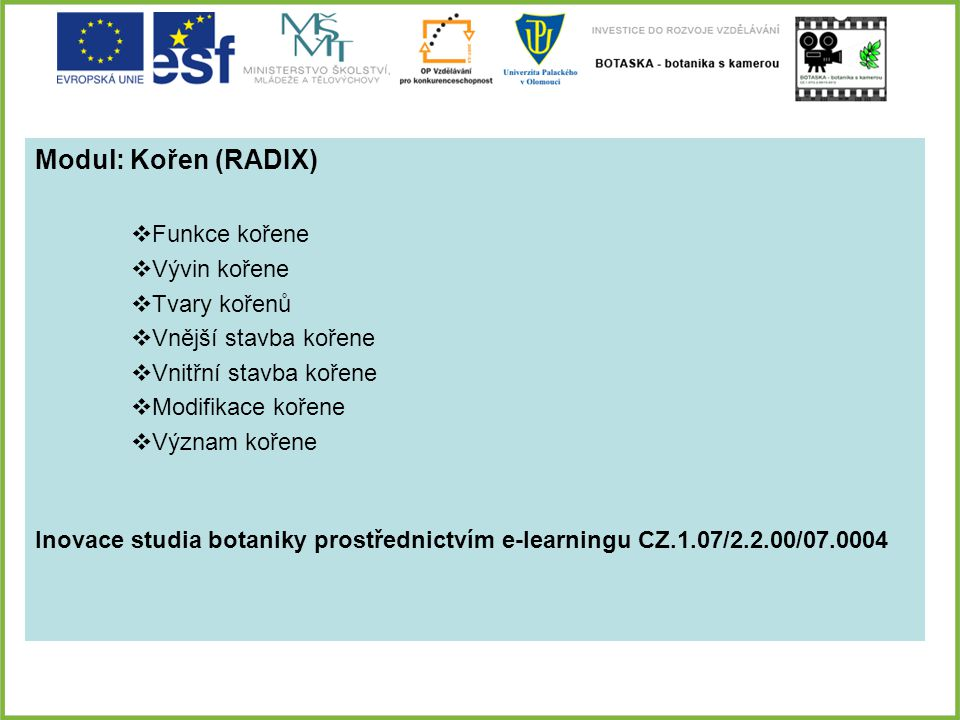 Modul: Kořen (RADIX) Funkce kořene Vývin kořene Tvary kořenů