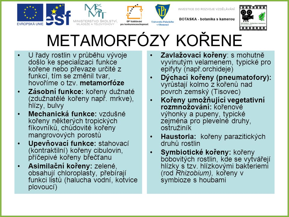 METAMORFÓZY KOŘENE