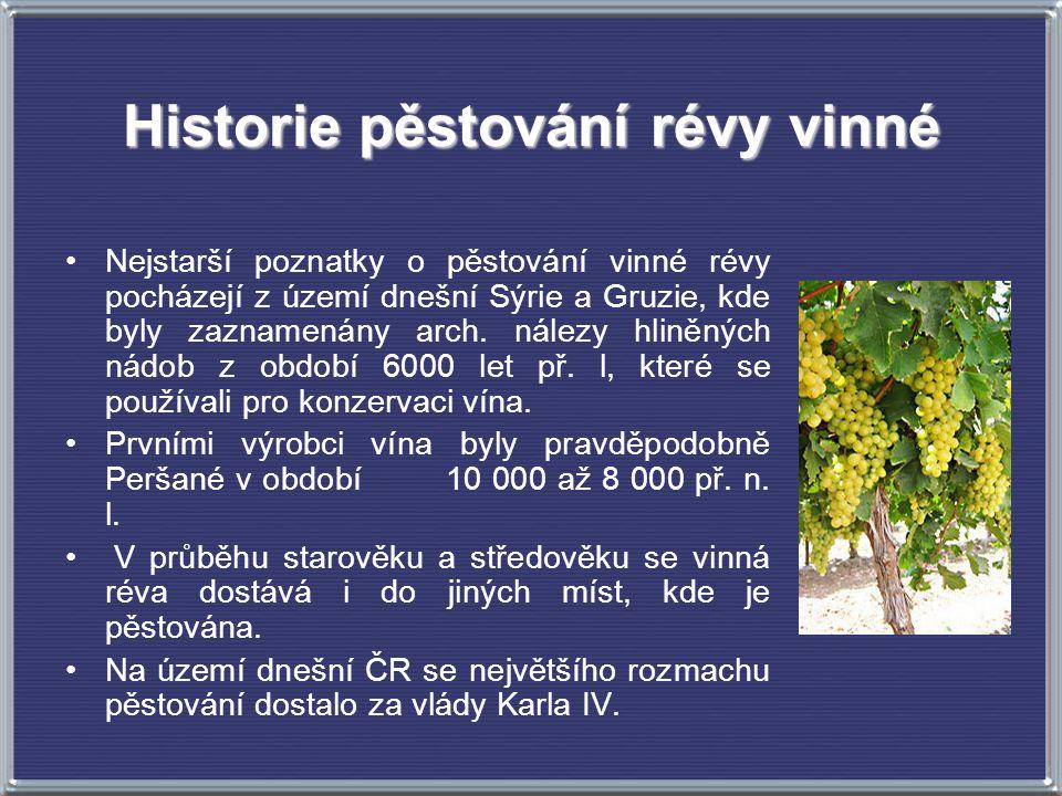 Historie pěstování révy vinné