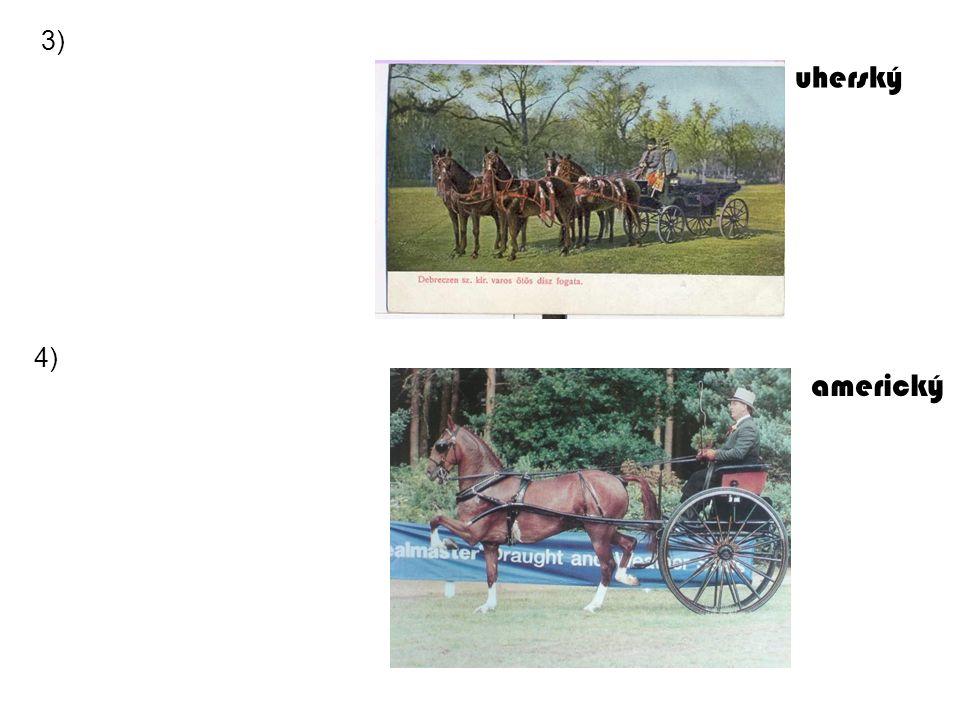 3) uherský 4) americký