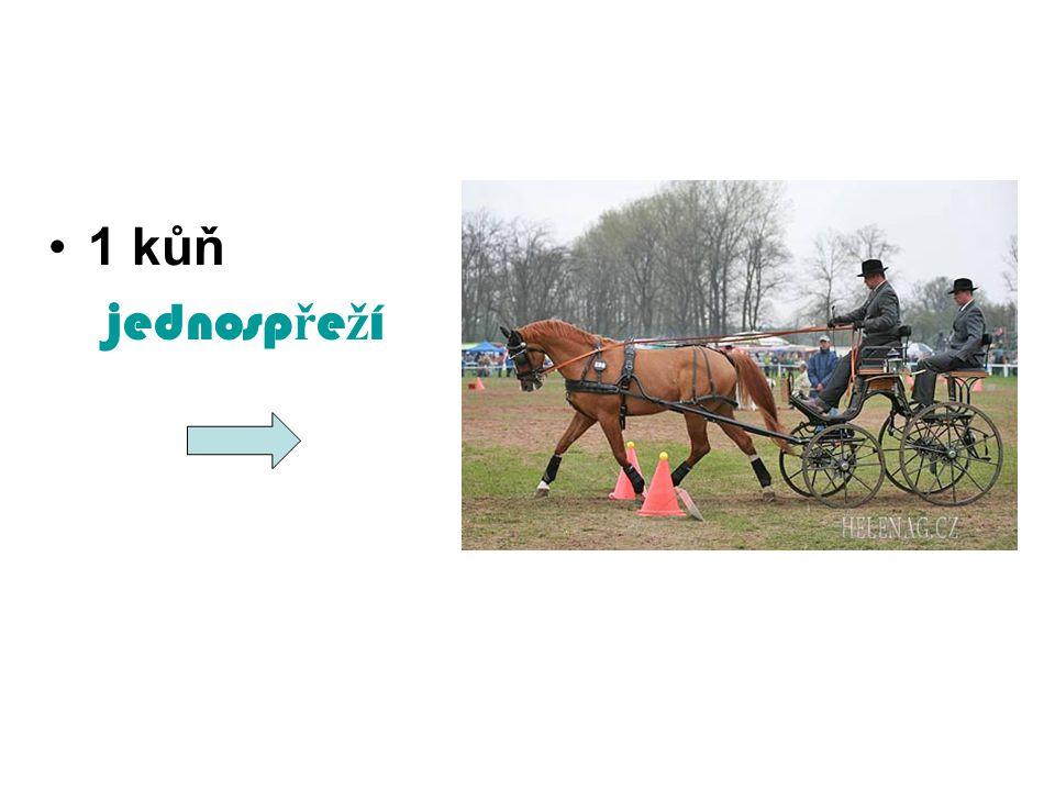 1 kůň jednospřeží