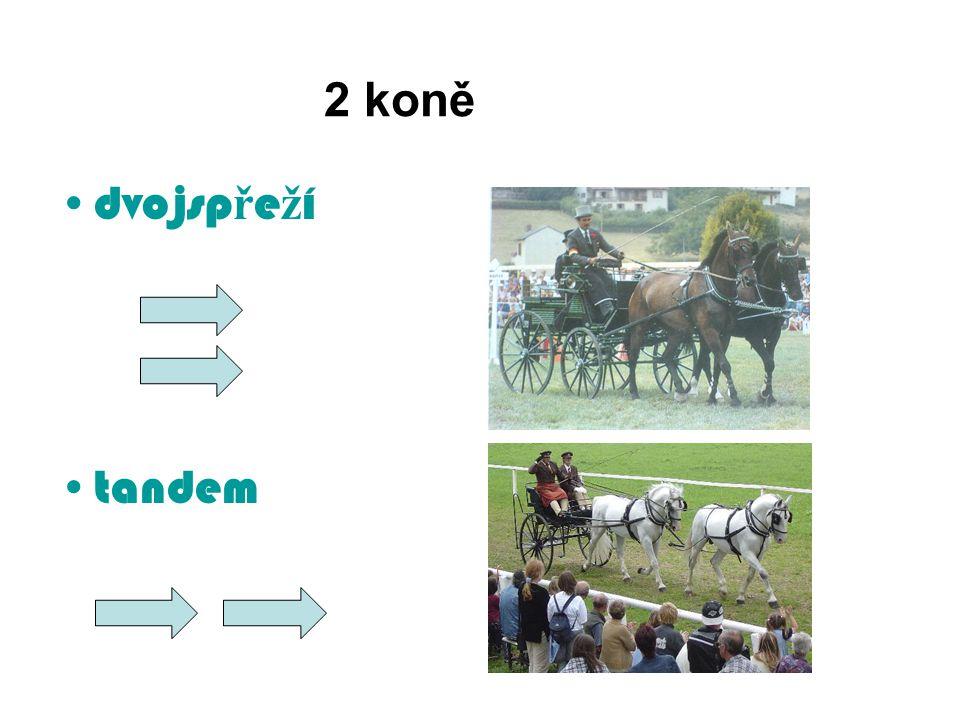 2 koně dvojspřeží tandem