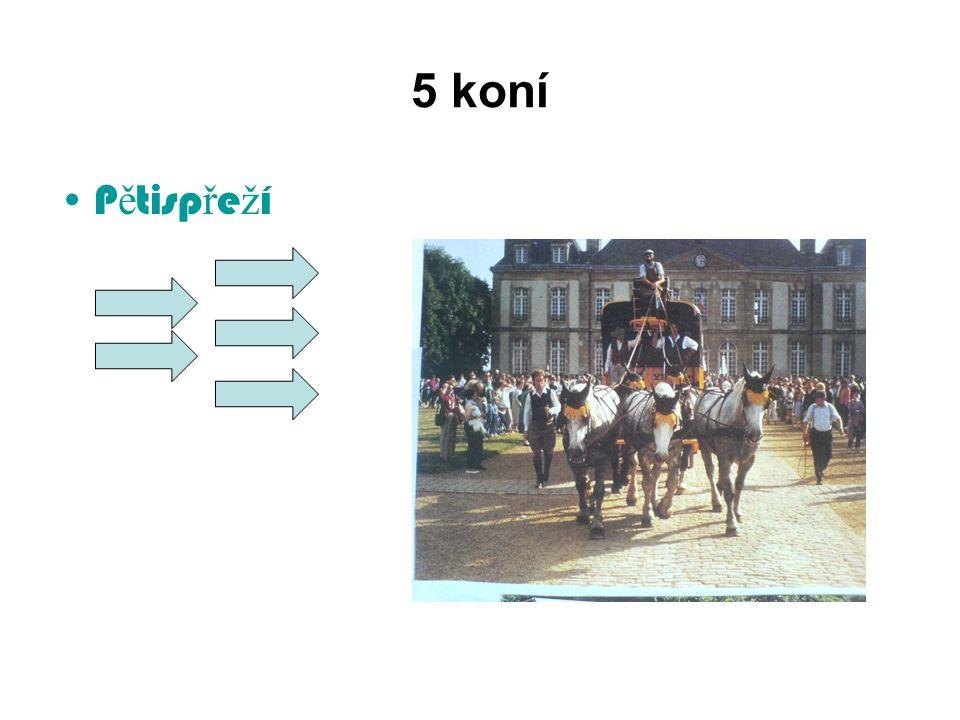 5 koní Pětispřeží