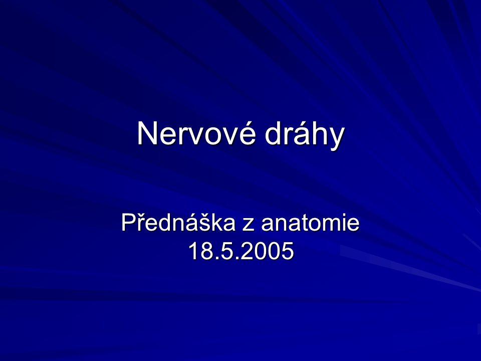 Nervové dráhy Přednáška z anatomie 18.5.2005