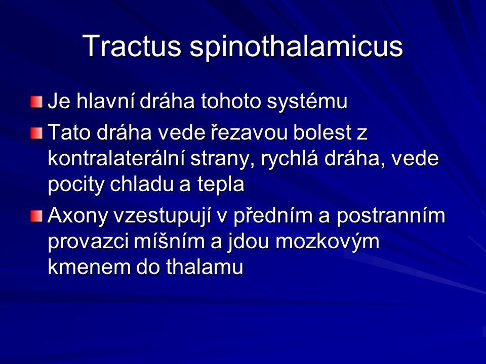 Tractus spinothalamicus