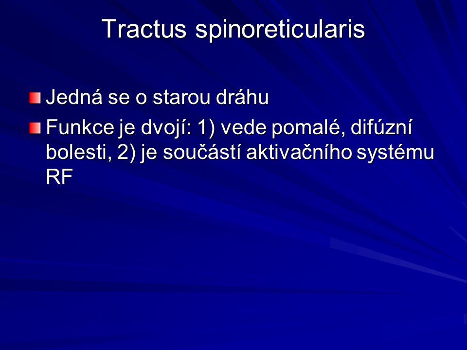 Tractus spinoreticularis