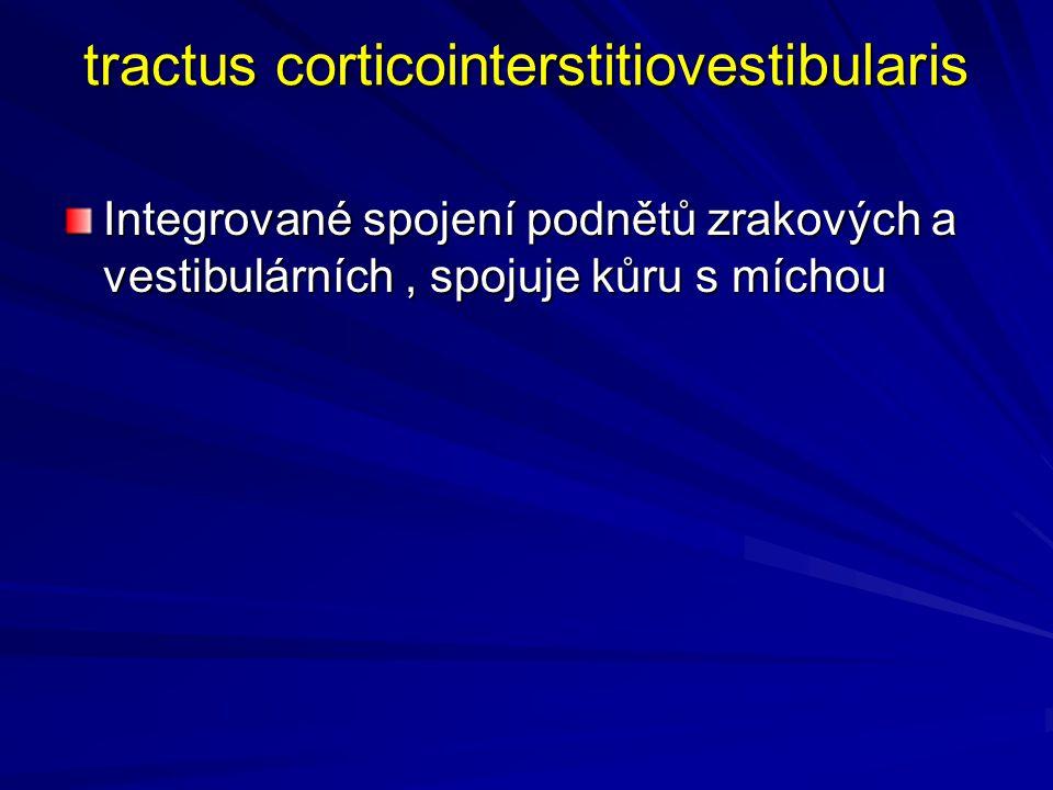 tractus corticointerstitiovestibularis