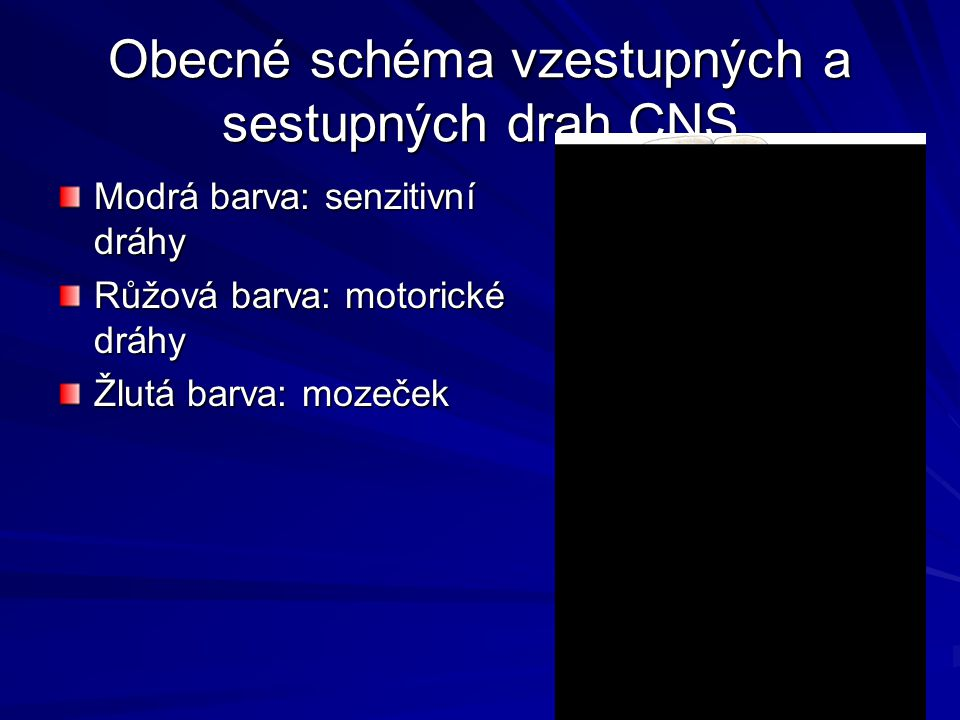 Obecné schéma vzestupných a sestupných drah CNS