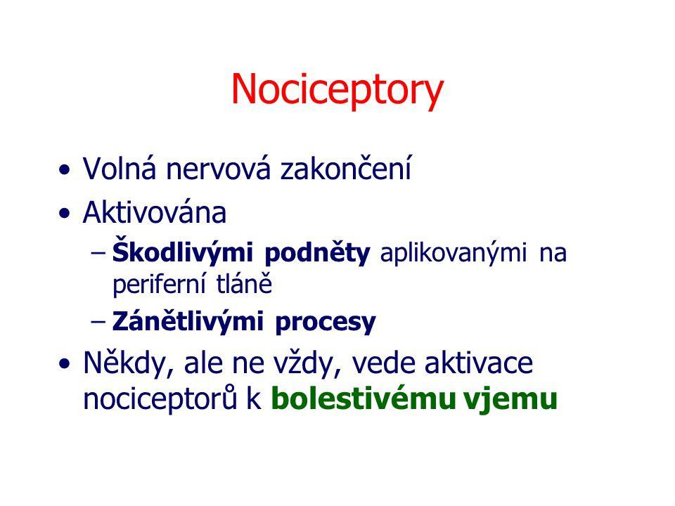 Nociceptory Volná nervová zakončení Aktivována