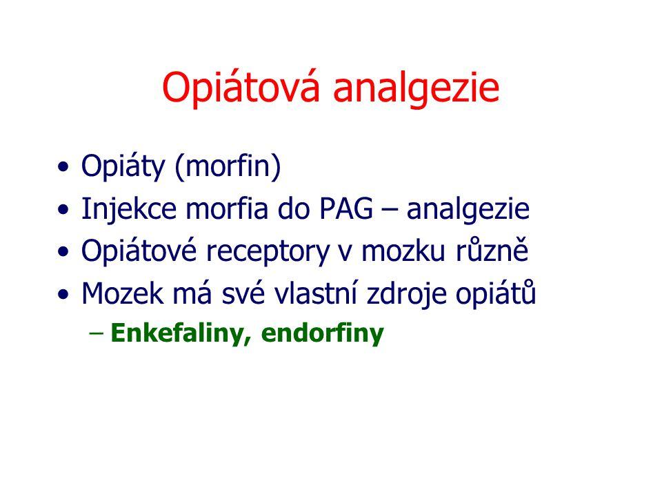 Opiátová analgezie Opiáty (morfin) Injekce morfia do PAG – analgezie