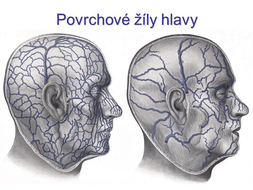 Povrchové žíly hlavy