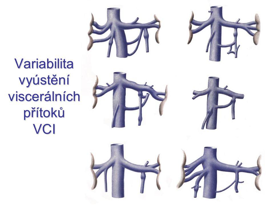 Variabilita vyústění viscerálních přítoků VCI