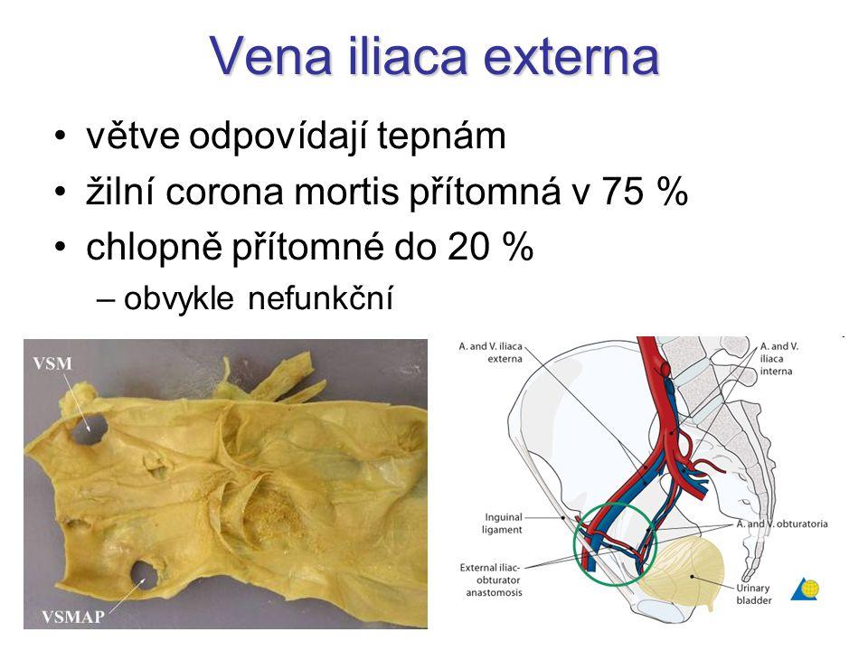 Vena iliaca externa větve odpovídají tepnám
