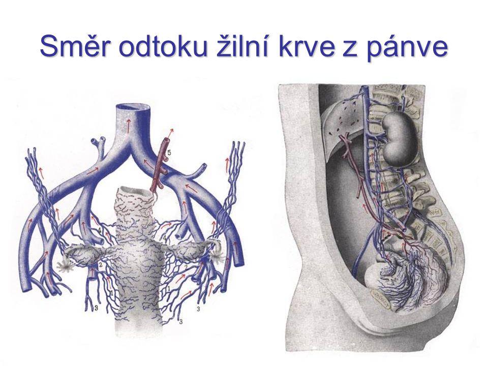 Směr odtoku žilní krve z pánve