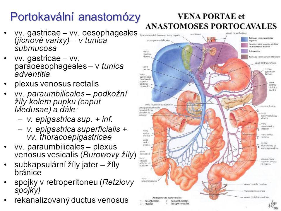 Portokavální anastomózy
