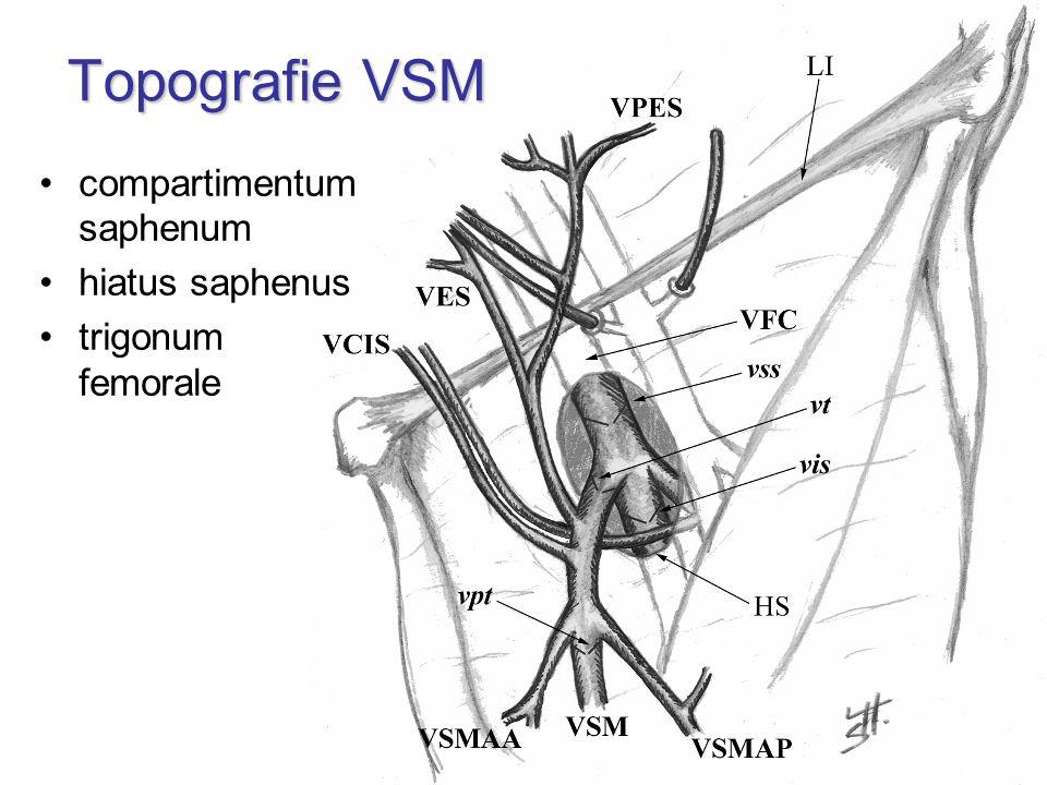 Topografie VSM compartimentum saphenum hiatus saphenus