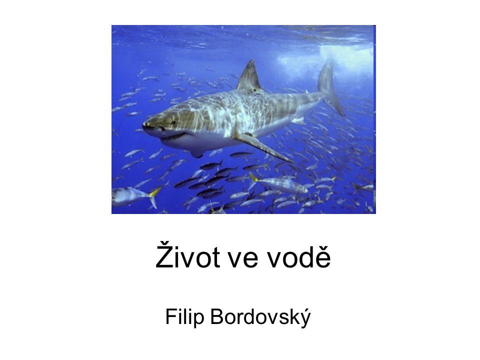 Život ve vodě Filip Bordovský