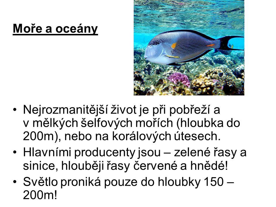 Moře a oceány Nejrozmanitější život je při pobřeží a v mělkých šelfových mořích (hloubka do 200m), nebo na korálových útesech.