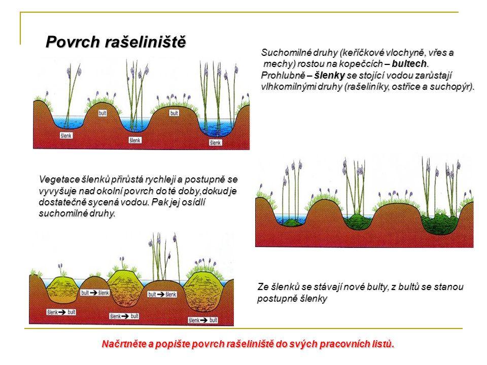 Povrch rašeliniště Suchomilné druhy (keříčkové vlochyně, vřes a