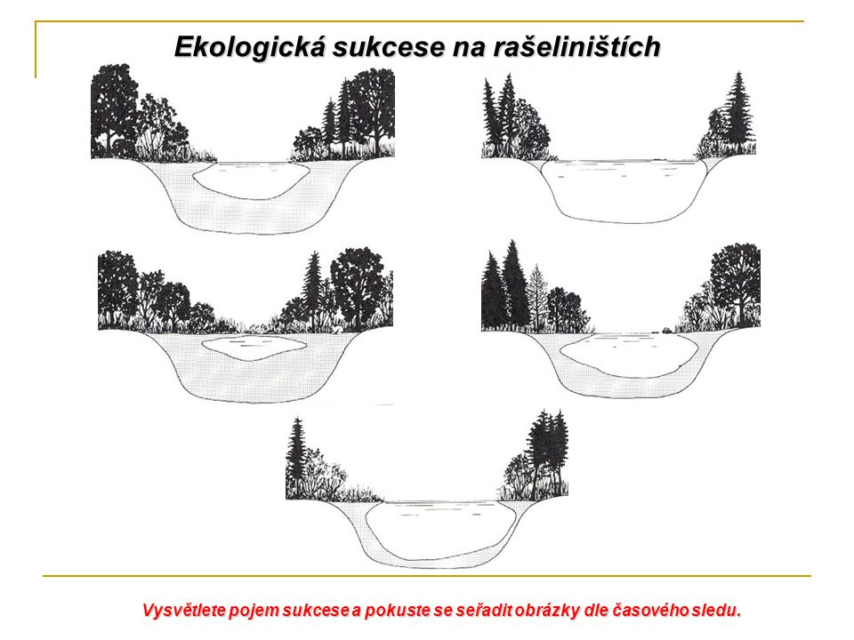 Ekologická sukcese na rašeliništích