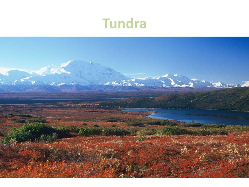 Tundra Na jih od arktických pustin