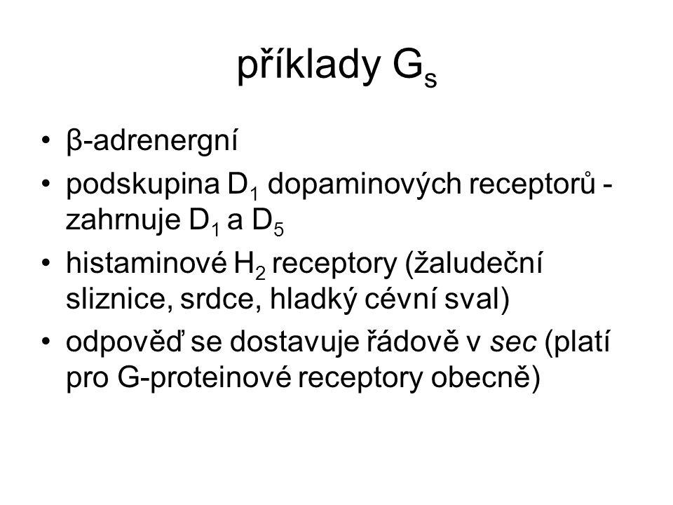 příklady Gs β-adrenergní