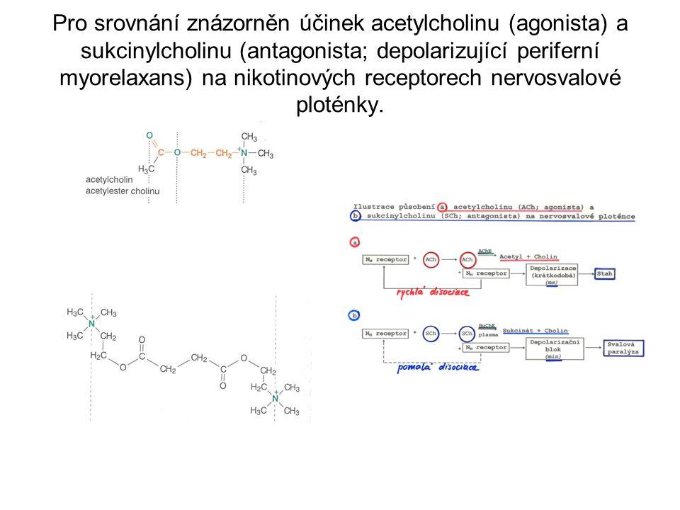Pro srovnání znázorněn účinek acetylcholinu (agonista) a sukcinylcholinu (antagonista; depolarizující periferní myorelaxans) na nikotinových receptorech nervosvalové ploténky.
