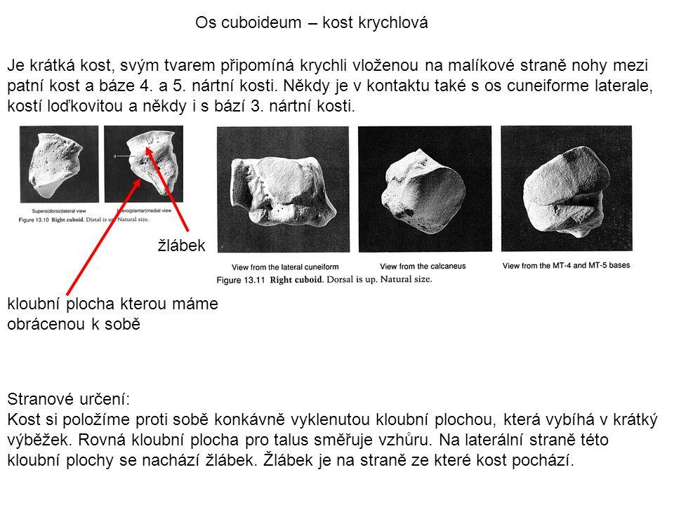 Os cuboideum – kost krychlová