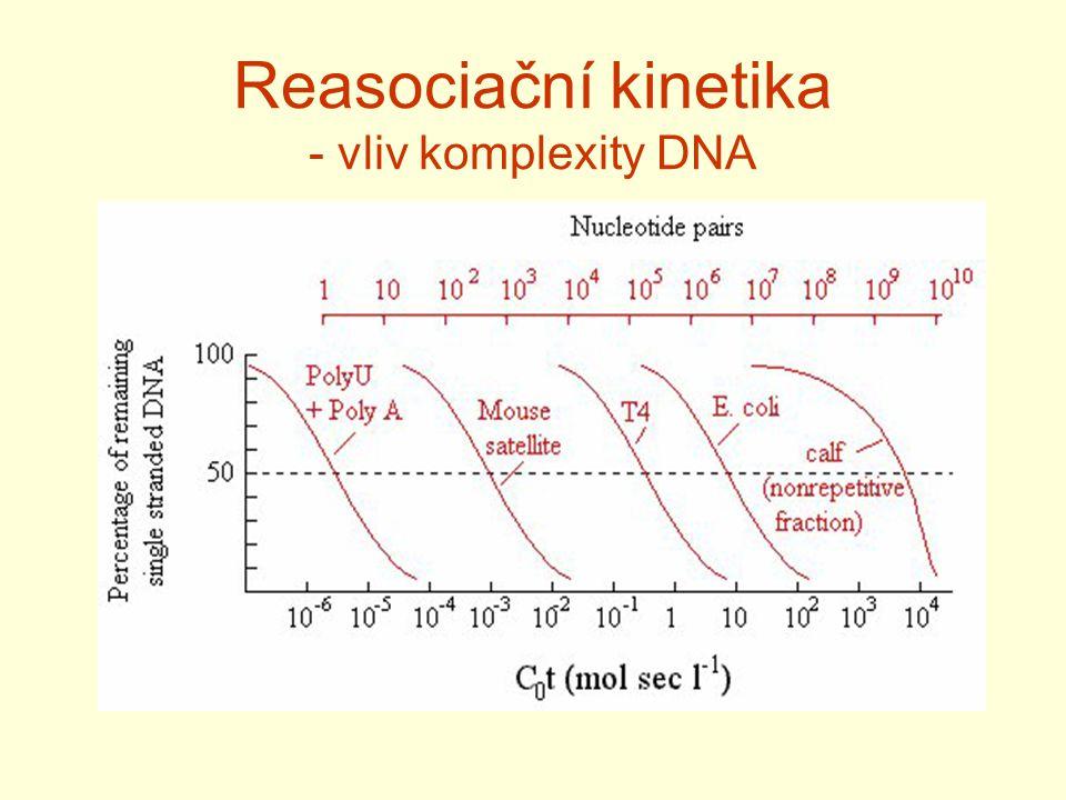 Reasociační kinetika - vliv komplexity DNA