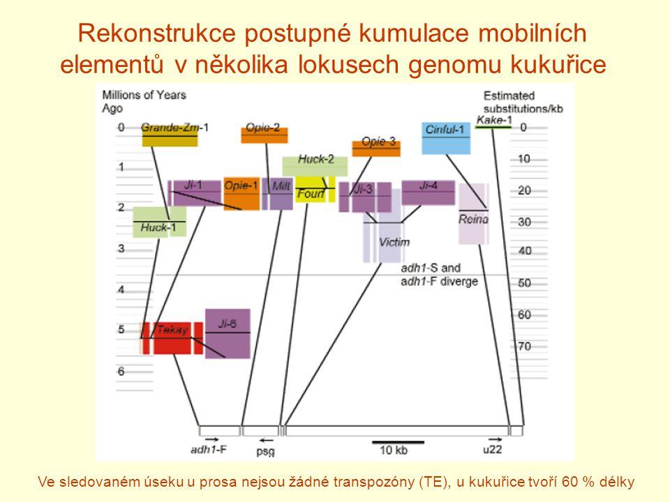 Rekonstrukce postupné kumulace mobilních