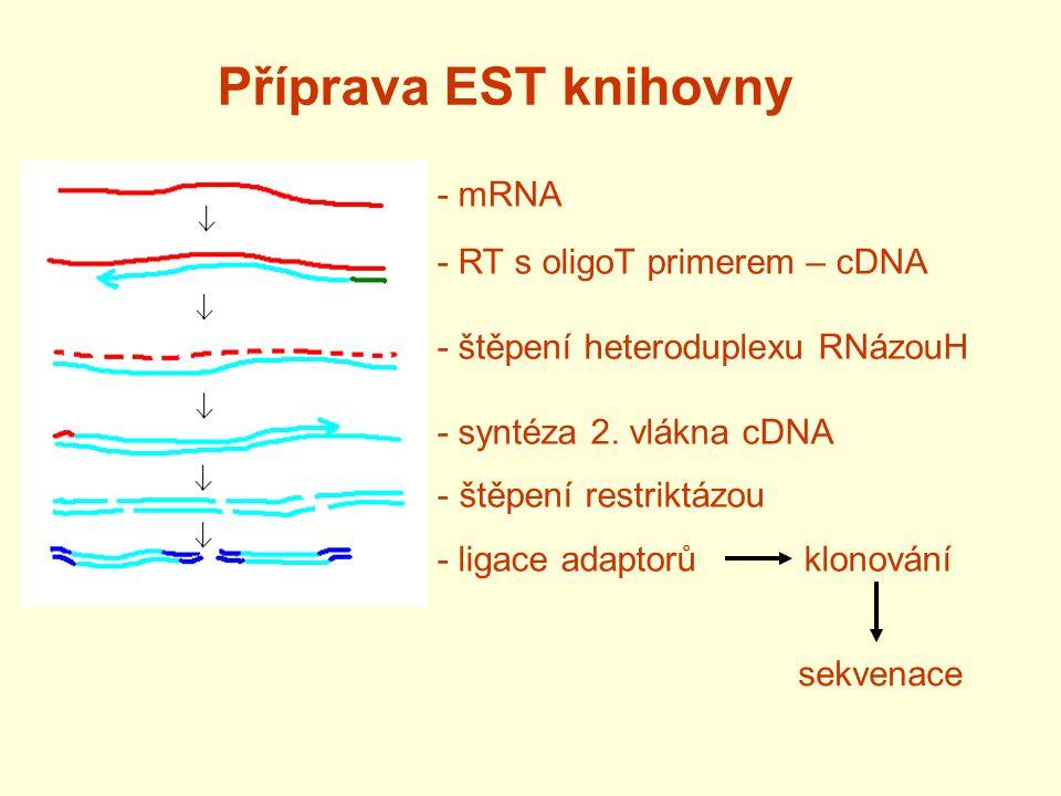 Příprava EST knihovny - mRNA - RT s oligoT primerem – cDNA