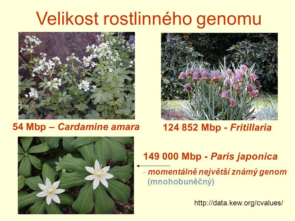 Velikost rostlinného genomu