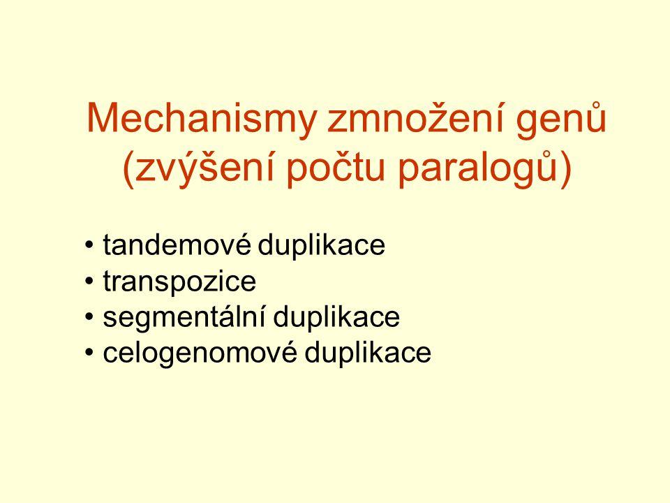 Mechanismy zmnožení genů (zvýšení počtu paralogů)