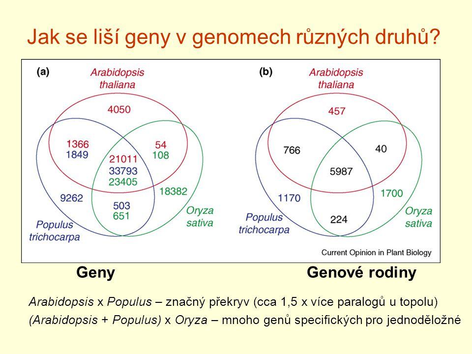 Jak se liší geny v genomech různých druhů