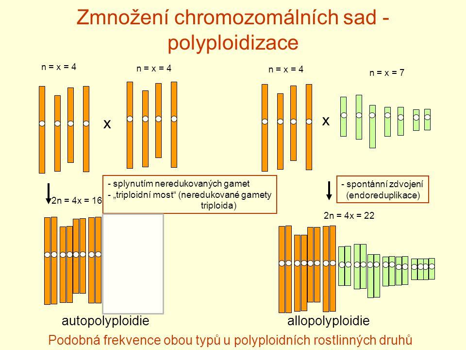 Zmnožení chromozomálních sad - polyploidizace