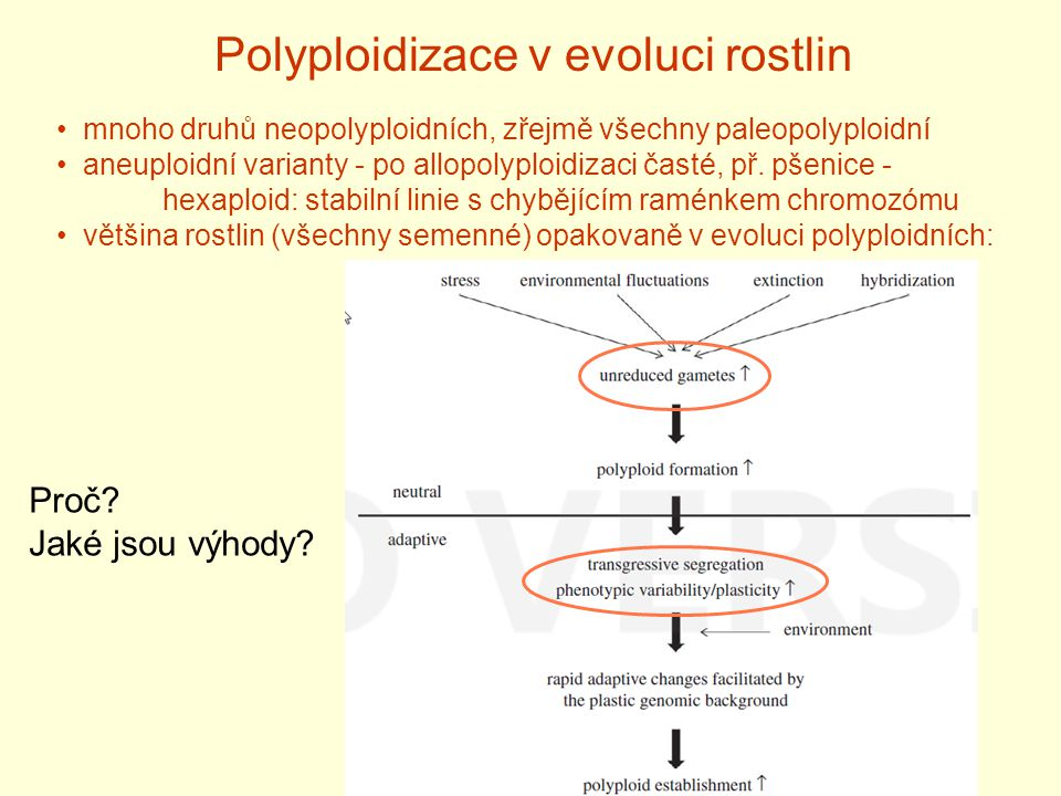 Polyploidizace v evoluci rostlin