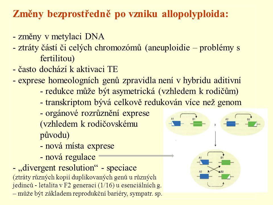 Změny bezprostředně po vzniku allopolyploida: