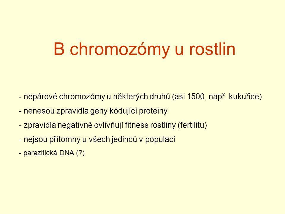 B chromozómy u rostlin nepárové chromozómy u některých druhů (asi 1500, např. kukuřice) nenesou zpravidla geny kódující proteiny.