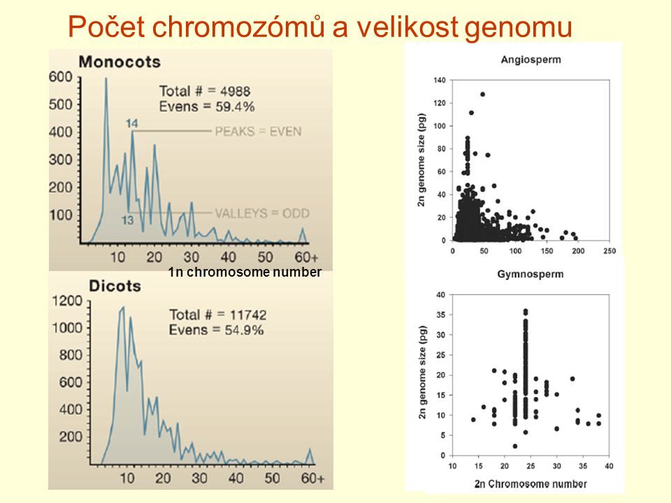 Počet chromozómů a velikost genomu