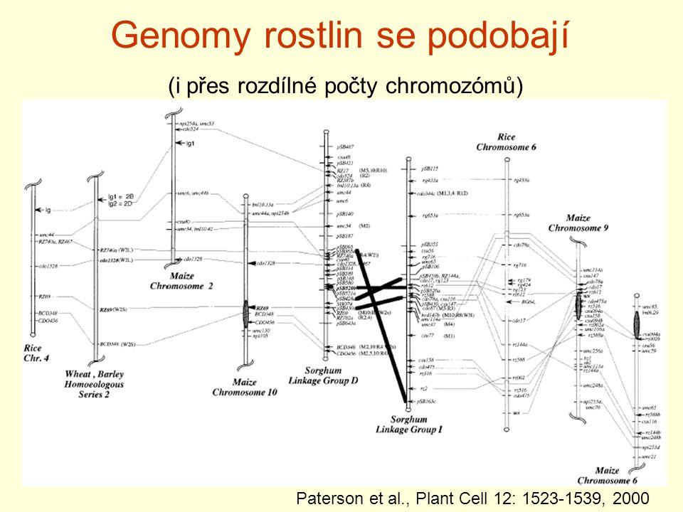 Genomy rostlin se podobají (i přes rozdílné počty chromozómů)