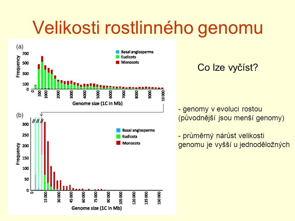 Velikosti rostlinného genomu