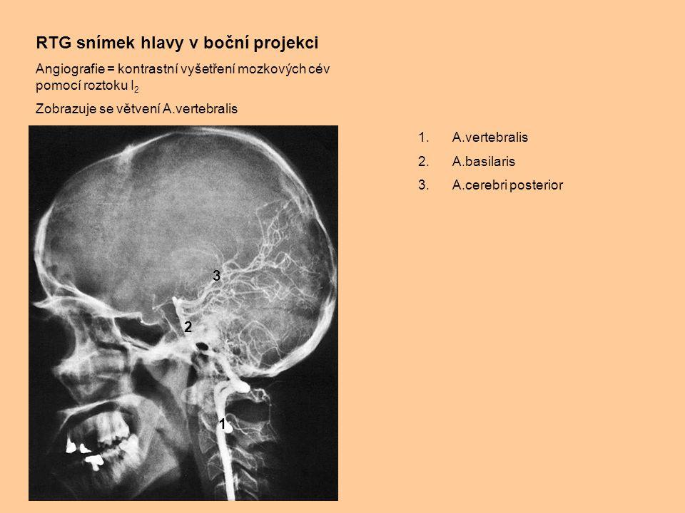 RTG snímek hlavy v boční projekci