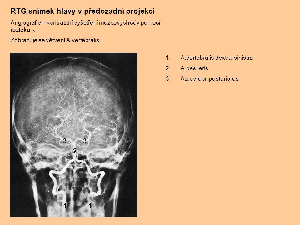 RTG snímek hlavy v předozadní projekci