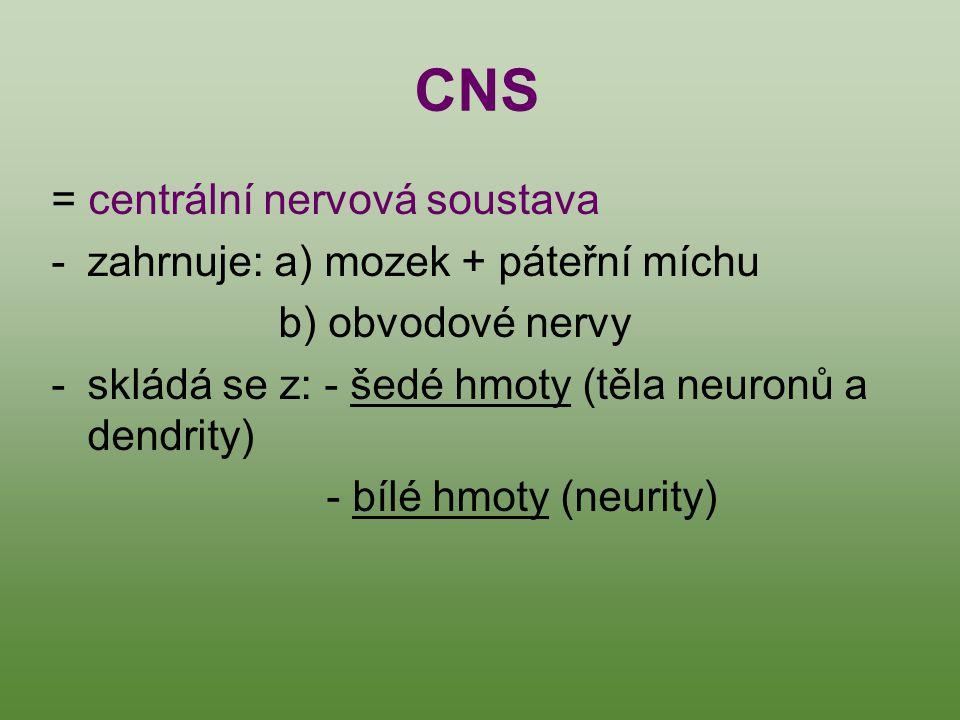CNS = centrální nervová soustava zahrnuje: a) mozek + páteřní míchu