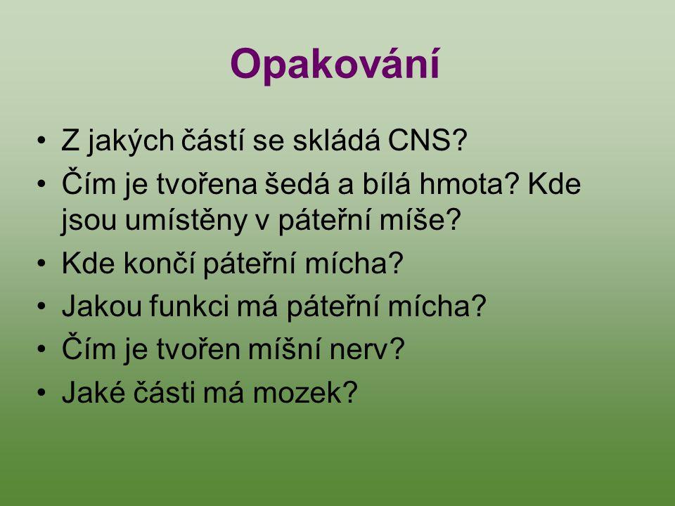 Opakování Z jakých částí se skládá CNS