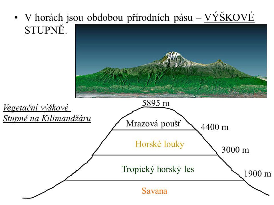 V horách jsou obdobou přírodních pásu – VÝŠKOVÉ STUPNĚ.