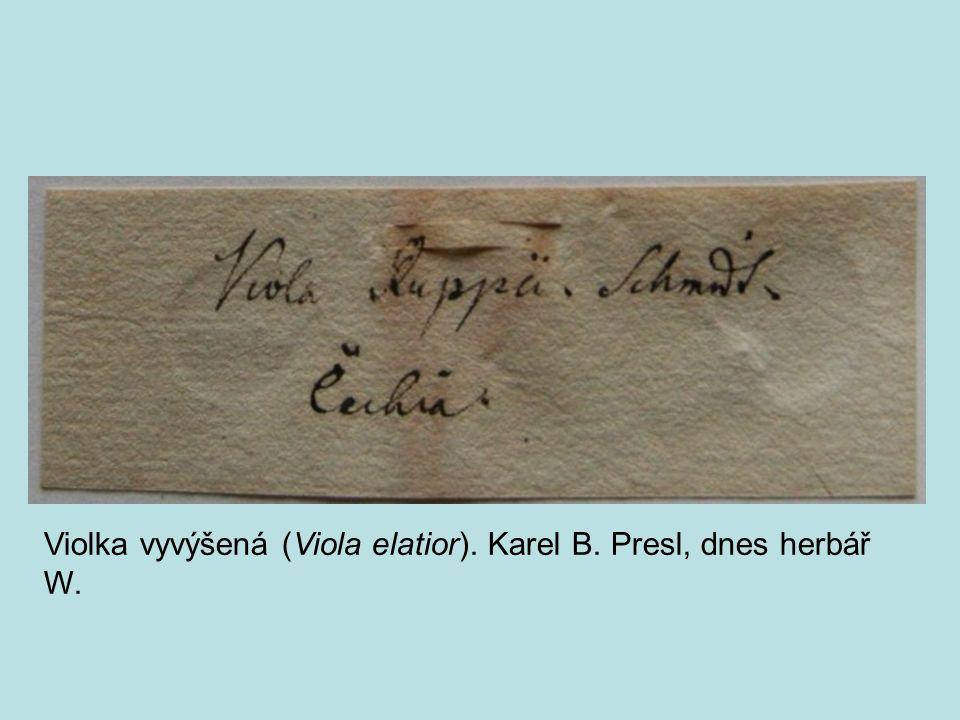 Violka vyvýšená (Viola elatior). Karel B. Presl, dnes herbář W.