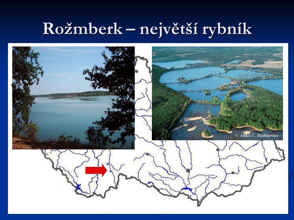 Rožmberk – největší rybník